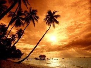 cocotier-coucher_de_soleil-2