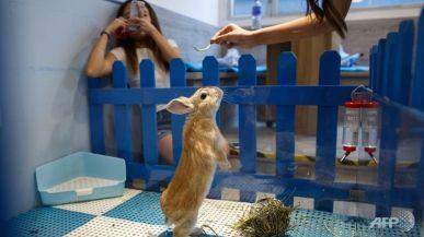 bar-a-lapins